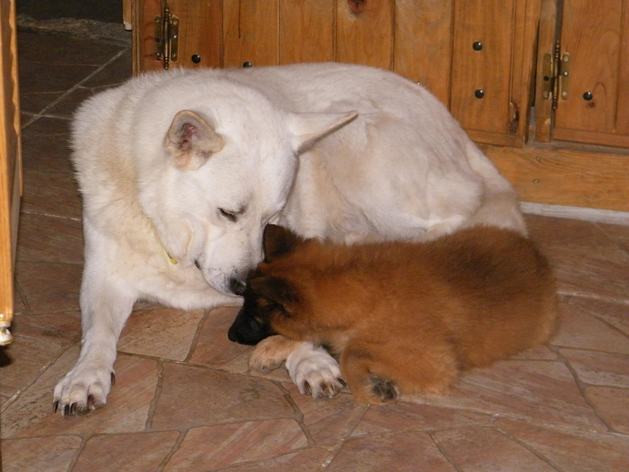 Léogard'Og vous propose des cours d'éducation canine, des activités canines et une pension familiale dans l'Eure